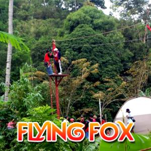 Flying Fox 300x300 - Flying Fox